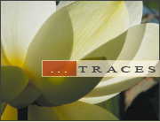 Trace n°8